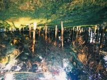 El recorrer a través del bosque imagen de archivo