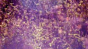 El reflejo hermoso de hilos de araña en hierba en luz del sol con el sol del efecto y la lente señalan por medio de luces almacen de video