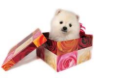 El regalo. Imágenes de archivo libres de regalías