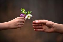 El regalo de la flor de la mano del niño Foto de archivo libre de regalías