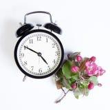 El reloj con las flores de un Apple-árbol del niedzwetzkyana Dieck del Malus de Nedzvetsky aislado en el fondo blanco Imagen de archivo