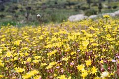 El reloj de Ley que las flores crecen Foto de archivo
