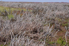 El remiendo consumido del brezo en North Yorkshire amarra Foto de archivo
