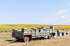 El remolque con la abeja encorcha cerca del campo del girasol Imagenes de archivo