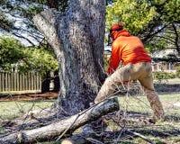 El removedor profesional del árbol corta el árbol Fotos de archivo