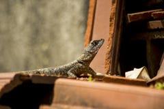 El reptil Fotografía de archivo