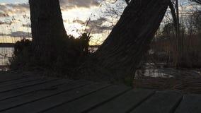 El resbalador tiró por el lado de los árboles de un lago y de la vegetación del lago que revelaban metrajes