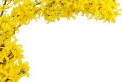 El resorte amarillo florece frontera Imagen de archivo