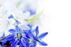 El resorte florece el fondo Foto de archivo libre de regalías