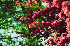 El resorte florece fondo Imagen de archivo