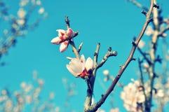 El resorte florece macro Imagen de archivo libre de regalías