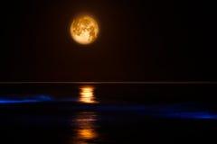 El resplandor azul en Costa del Pacífico agita marea del rojo del ~ Fotografía de archivo