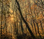 El resplandor del sol del otoño de la mañana Fotografía de archivo libre de regalías