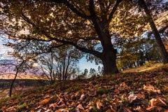El resplandor solar se nubla y árbol con las hojas coloreadas en otoño foto de archivo