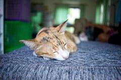 el resto del sueño del gato se relaja Imagen de archivo libre de regalías