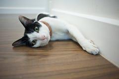 el resto del sueño del gato se relaja Fotografía de archivo libre de regalías