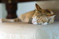 el resto del sueño del gato se relaja Imagen de archivo