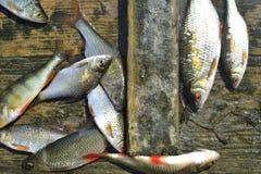 El retén de pescados imagen de archivo