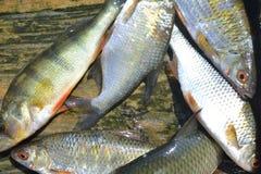 El retén de pescados fotos de archivo