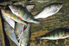 El retén de pescados fotografía de archivo libre de regalías