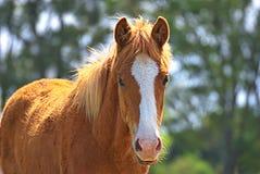 El retrato de un caballo libera en un campo en la Argentina imagen de archivo