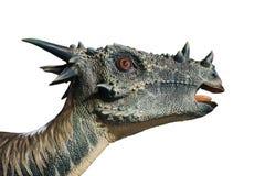 El retrato de un dinosaurio llamó el stygimoloch en el fondo blanco imagen de archivo libre de regalías