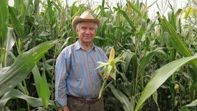 El retrato de un granjero mayor In una sonrisa del sombrero sostiene maíz de la mazorca almacen de metraje de vídeo
