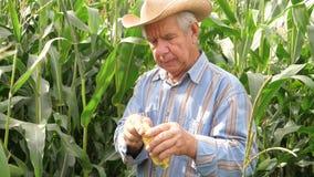 El retrato de un maíz mayor de la mano de Twisting In The del granjero intenta granos en gusto metrajes