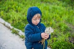 El retrato de un niño divertido lindo del niño pequeño que se coloca en el prado del campo del bosque con el diente de león flore Foto de archivo libre de regalías