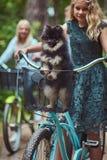 El retrato de una madre y la hija con un pelo rubio en una bicicleta montan con su pequeño perro lindo del perro de Pomerania en  Imagen de archivo libre de regalías
