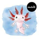El retrato del mexicanum del Ambystoma del Axolotl de la acuarela, Vector enfermedad Foto de archivo