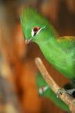 Pájaro verde Fotos de archivo libres de regalías