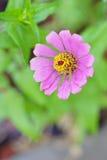 El retrato del primer de la flor rosada en las hojas verdes como fondo Fotos de archivo