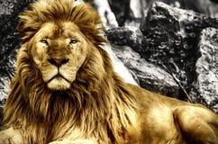 El rey Foto de archivo