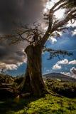 El rey de la tierra Foto de archivo libre de regalías