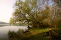 El Rin viejo cerca de Speyer, Alemania Foto de archivo