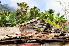 El Rincon, land of bananas. Tenerife. Royalty Free Stock Images