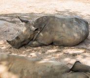 El rinoceronte coloca Imágenes de archivo libres de regalías
