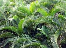 El ritmo de las palmeras foto de archivo libre de regalías