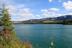 El río Yukón, Whitehorse, el Yukón, Canadá Foto de archivo libre de regalías