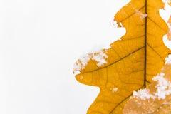El roble amarillo se va en un fondo de la nieve blanca Foto de archivo