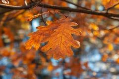 El roble amarillo se va sobre el agua en luz del sol brillante Parque soleado del otoño imagen de archivo
