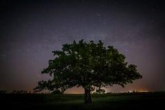 El roble con verde se va en un fondo del cielo nocturno Foto de archivo