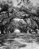 El roble cubrió el camino Fotografía de archivo libre de regalías