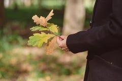 El roble del otoño se va en una rama en manos femeninas Imagenes de archivo