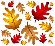 El roble del otoño sale del fondo Foto de archivo libre de regalías