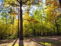 el roble se encendió por el sol en prado en bosque en otoño fotografía de archivo libre de regalías