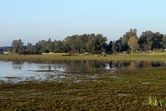 El RocÃo沼泽在黎明 免版税图库摄影