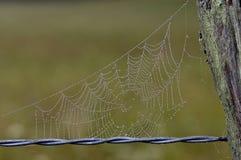 El rocío cubrió el Web de araña en la cerca foto de archivo
