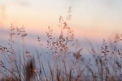 El rocío en la hierba brilla intensamente en la puesta del sol imagen de archivo